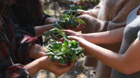 Plants in hands - social enterprise picture